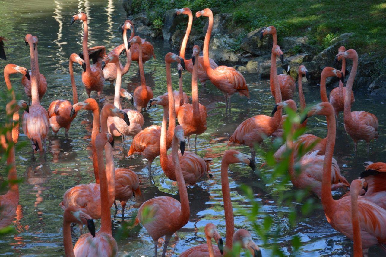 Zoo de Beauval Juillet 2016