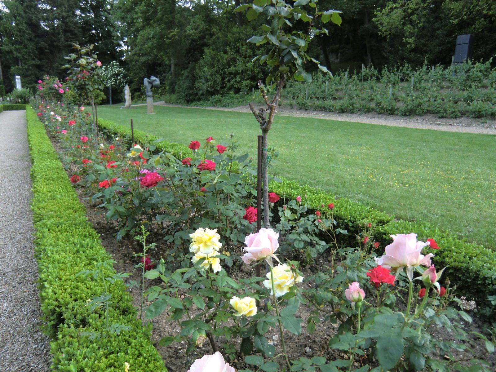 Les Roses du Musée d'Armande Béjart (19/05/2012)