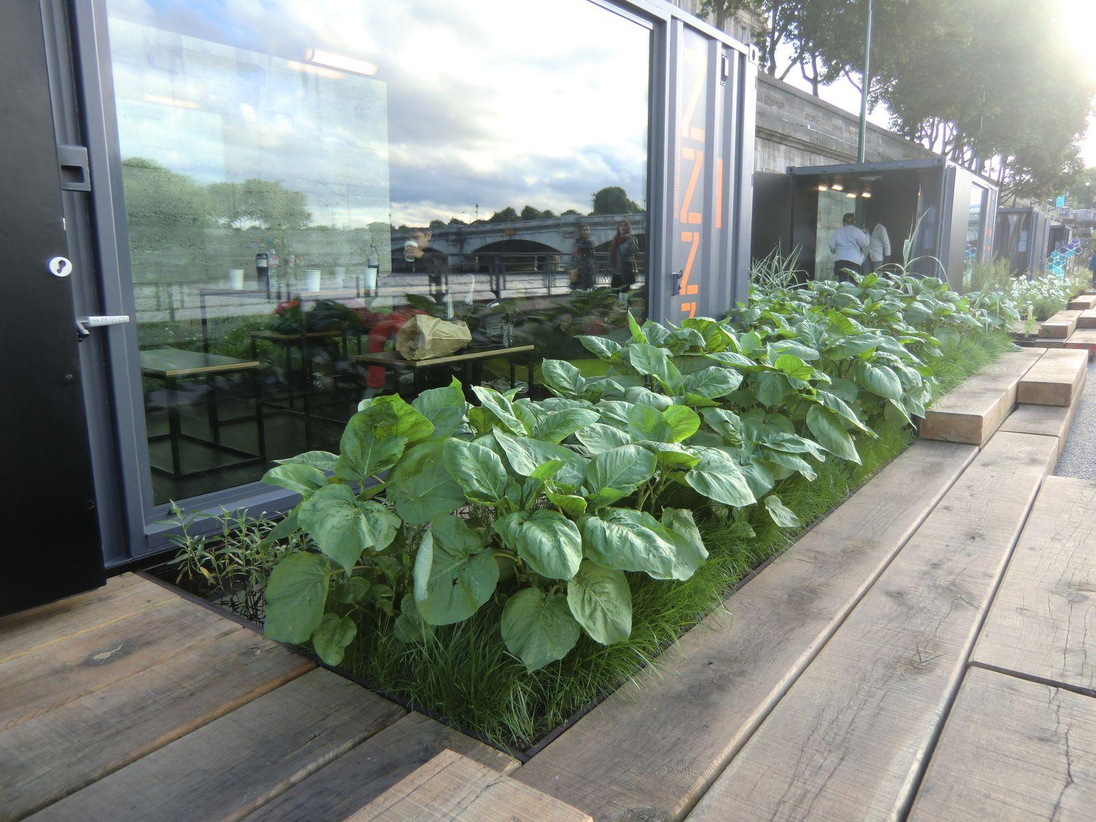 Petites pièces vitrées à louer aussi pour des rendez-vous entre amis ou autres.. décoration fleurs, plantes aquatiques