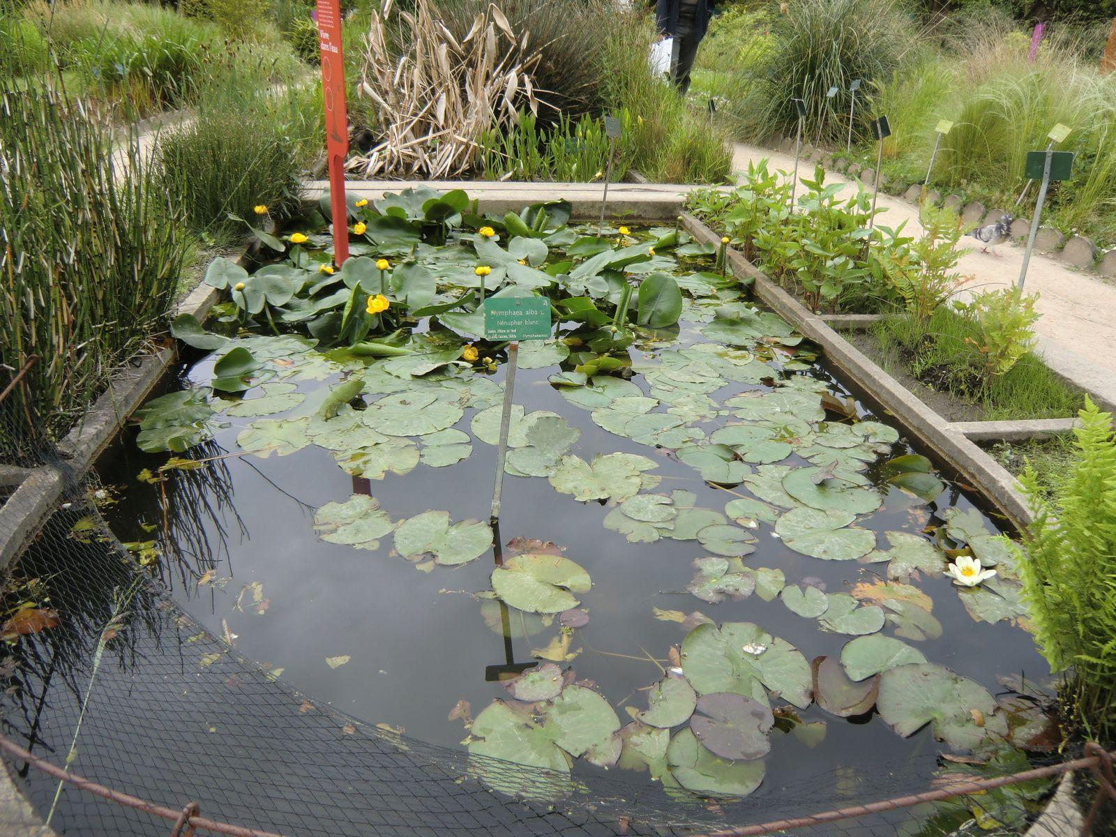 La végétation aquatique