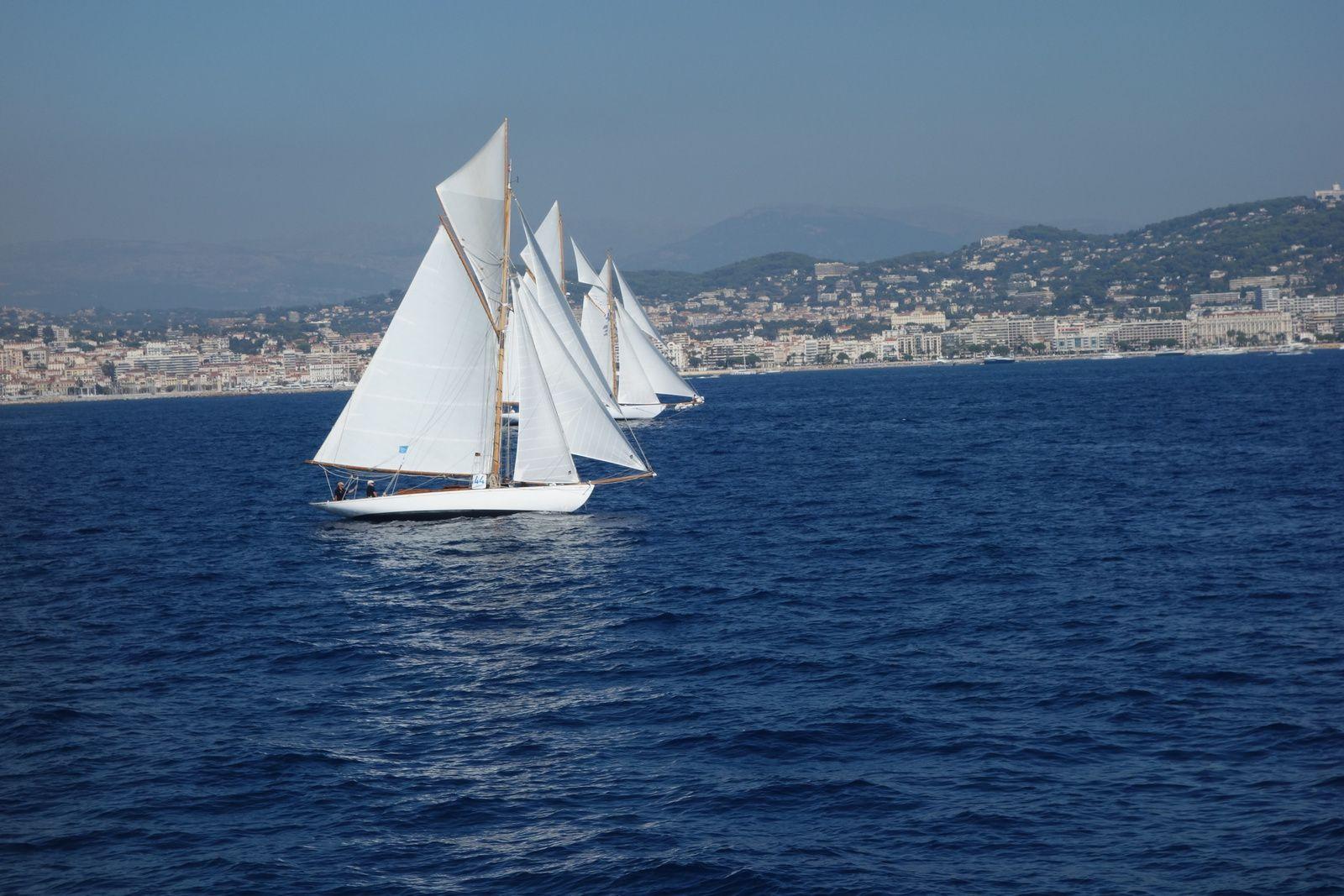 L'élégance de ces voiliers blancs comme posés sur l'eau.