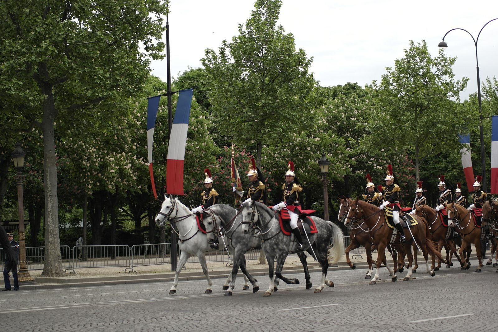 Chevaux timbaliers (gris)