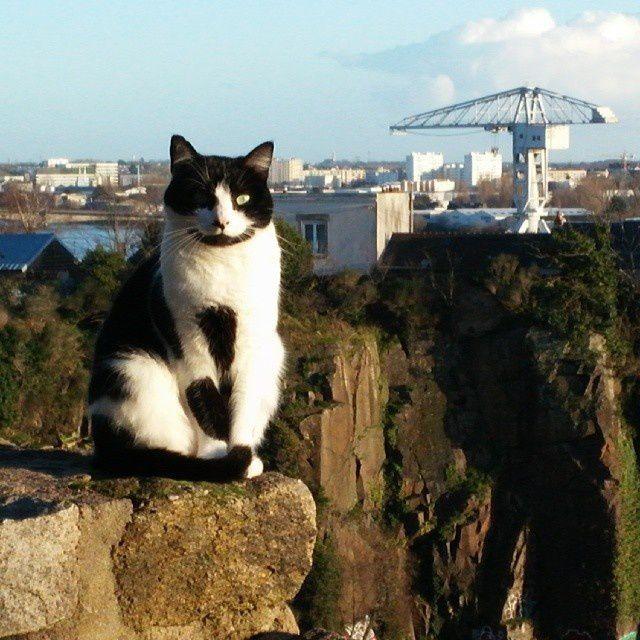 En balade, croiser un chat fier comme une statue égyptienne