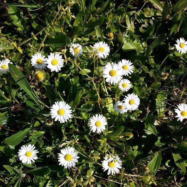 Un petit goût de printemps