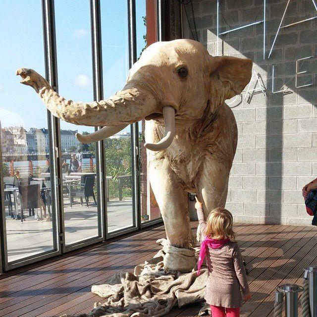 On a vu un éléphant en pyjama, il aurait plu à PetitChou, on reviendra... #levoyageànantes