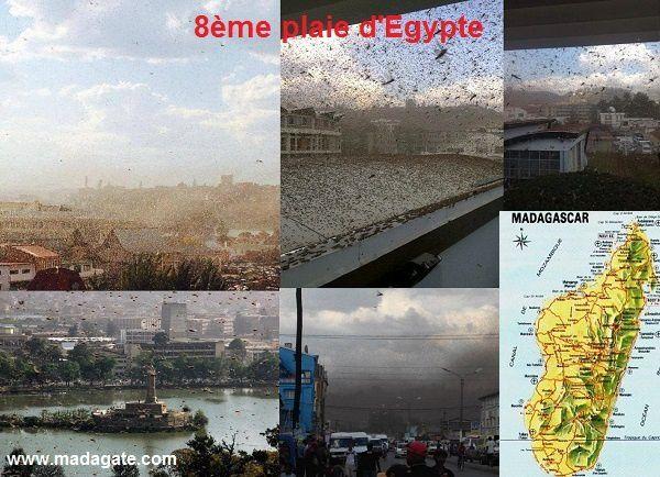 28 août 2014. Des millions de sauterelles envahissent Antananarivo, la Capitale de Madagascar
