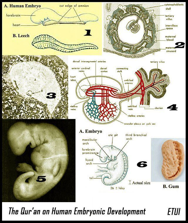 THE QUR'AN ON HUMAN EMBRYONIC DEVELOPMENT