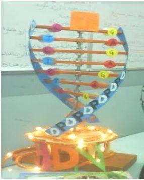 نموذج ADN