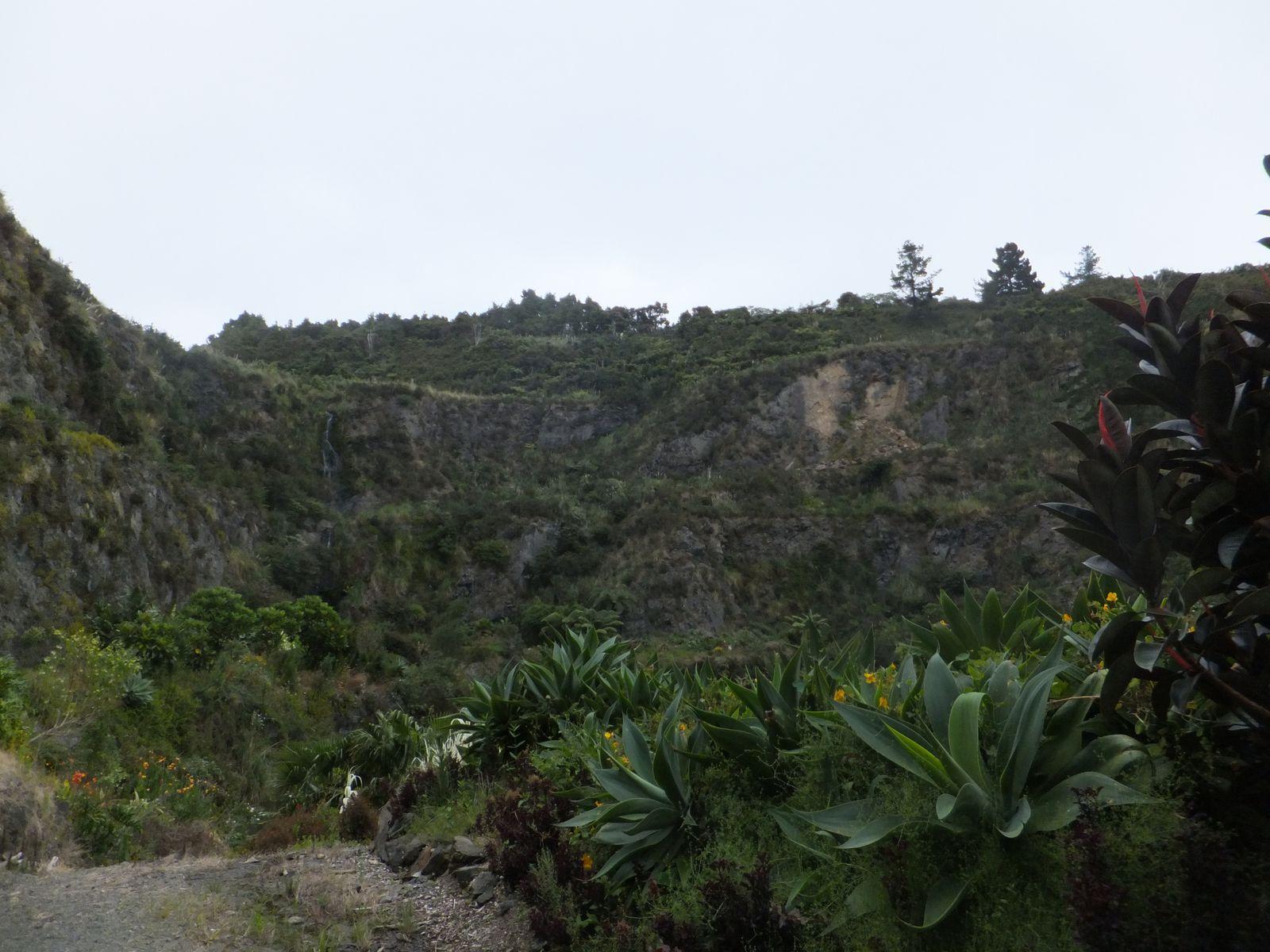 Whangarei Falls, botanic garden &amp&#x3B; kauri forest