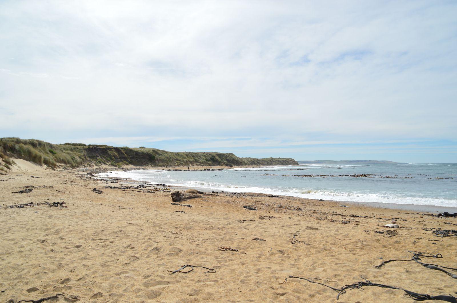 RTSI : Les Catlins, Dunedin et l'extrême Sud : phoques, manchots et côtes battues par les vents