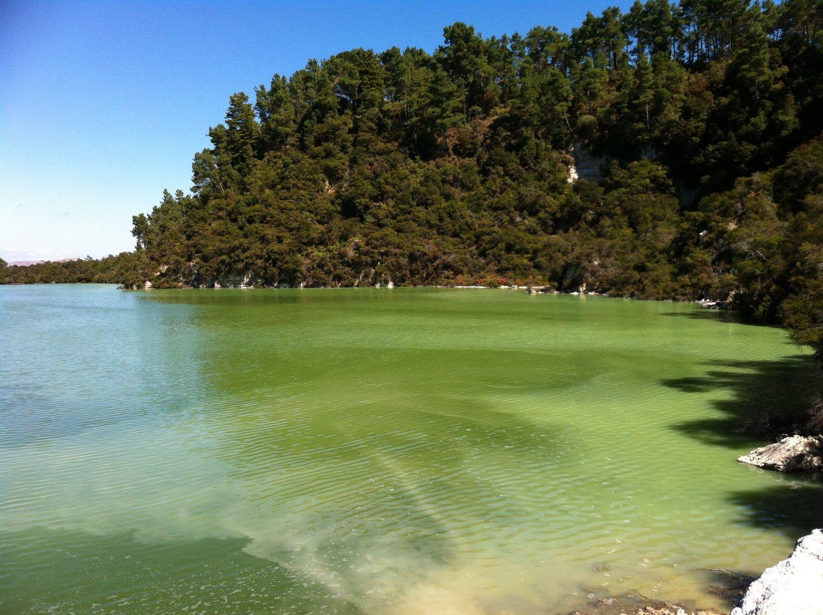 Rotorua &amp&#x3B; Wai-o-Tapu, coeur bouillonnant de l'Ile du Nord