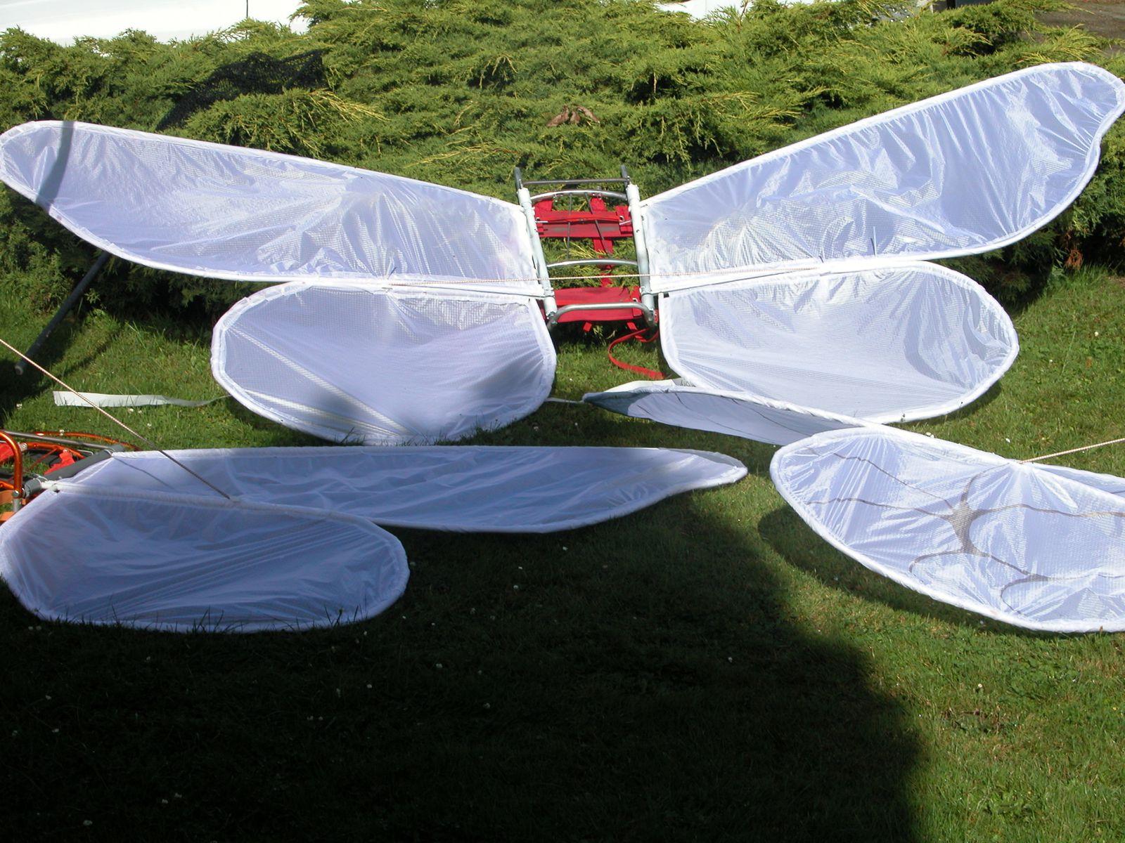 Préparation des papillons blancs