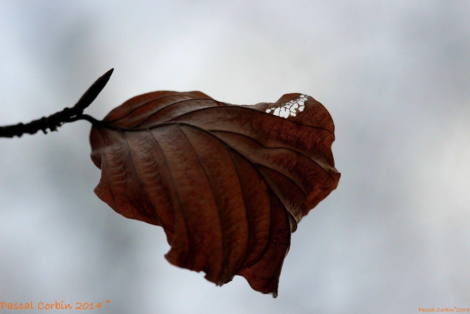 Douceur et pluies au cœur de l'hiver
