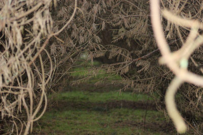 et j'ai aussi fait une petite balade dans les bois avec mon appareil photo &#x3B;)