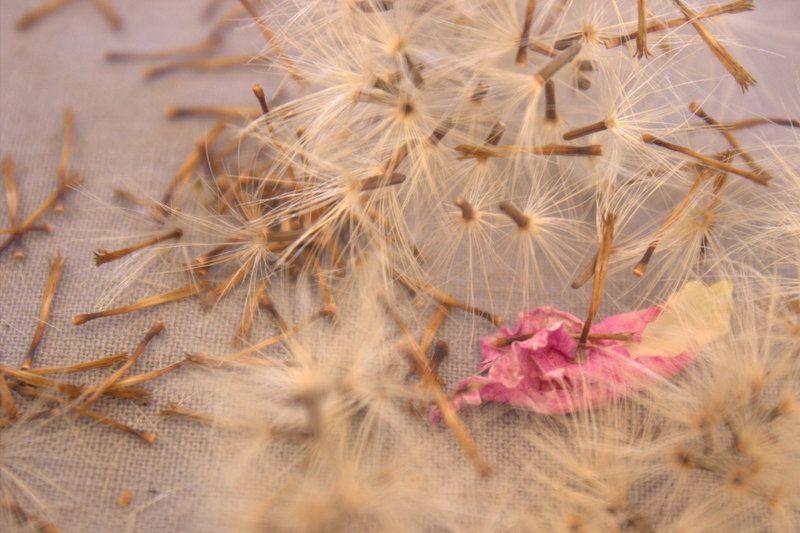 en ce moment les fleurs m'inspire je vais sans doute faire quelque croquis de robe en m'appuyant sur ces photos &#x3B;)