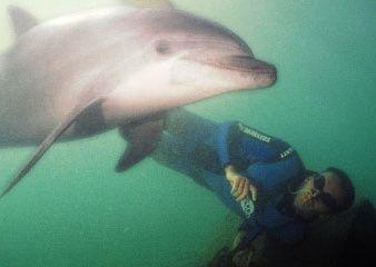 rencontre dauphins nice