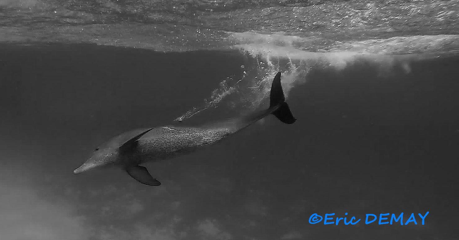 Réception du saut, belle trainée d'eau marquée par l'aileron dorsal.