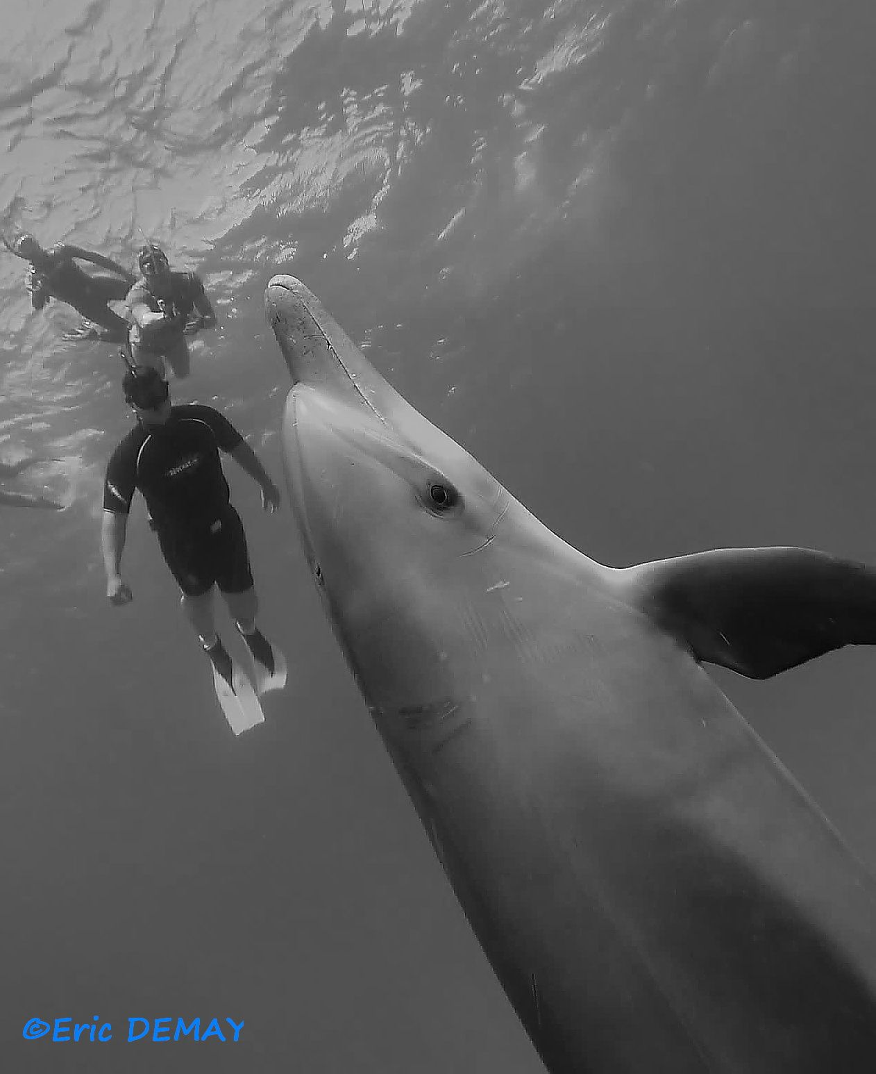 Un jeune dauphin, Romain, Théo et Valérie derrière.