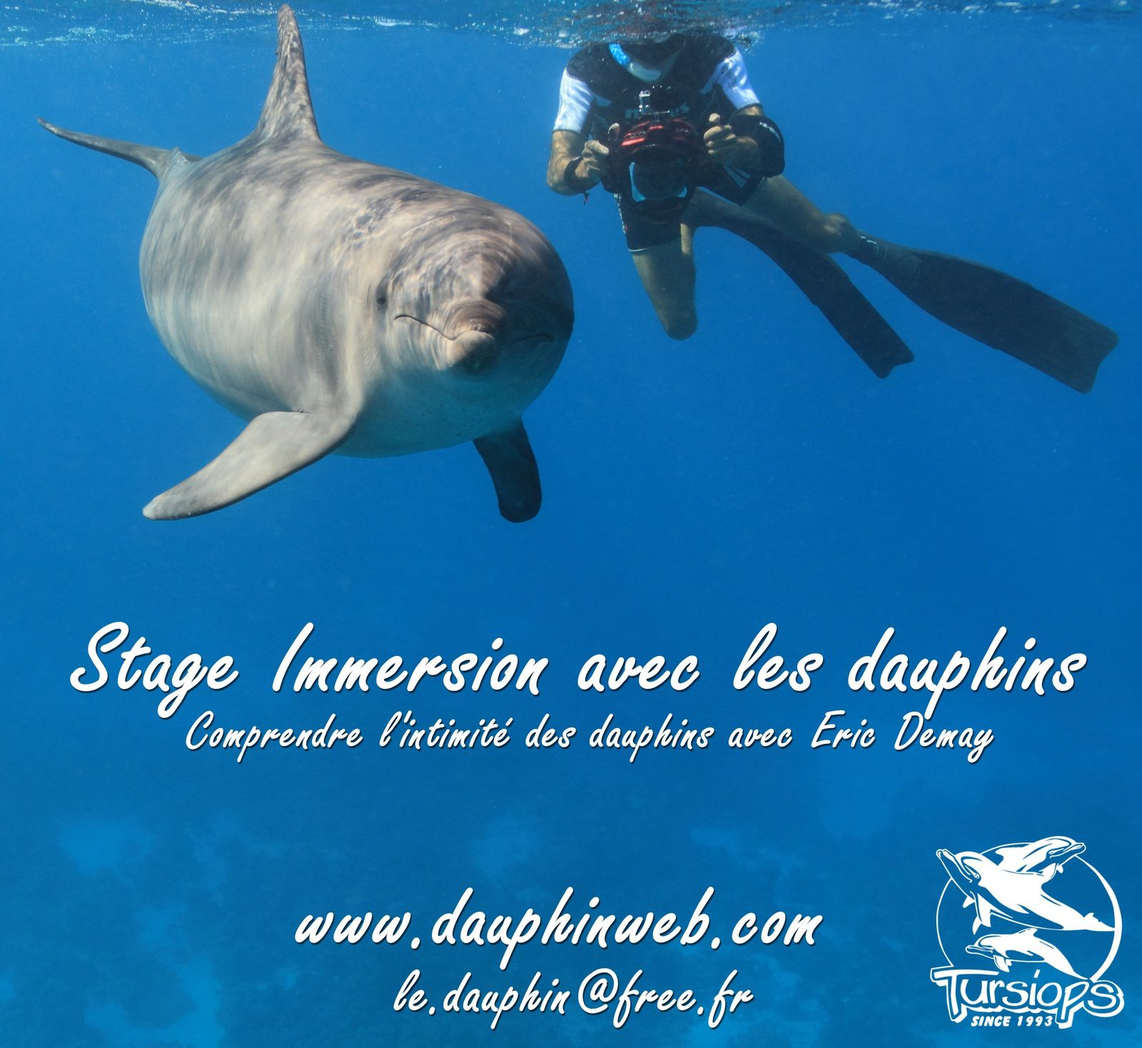 Nager avec les dauphins le projet dauphin for Nager avec les dauphins nice