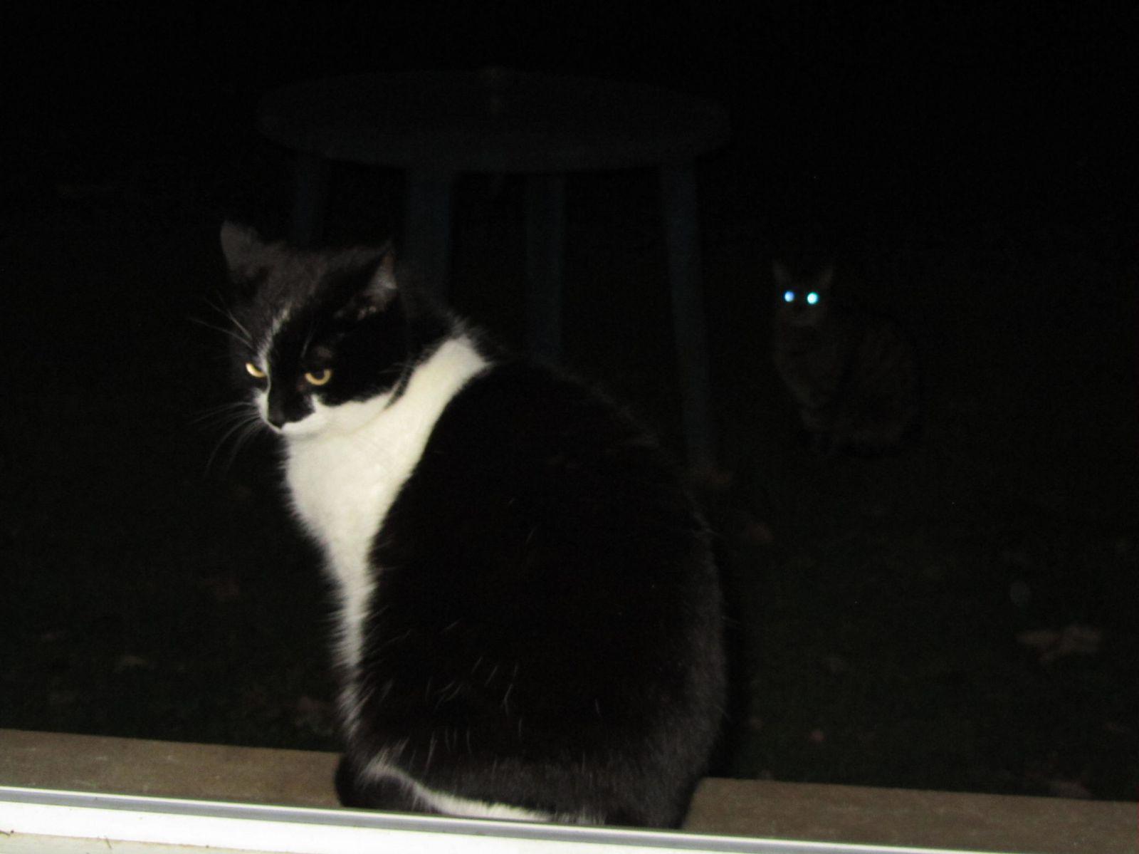 Poupette, perdue dans ses pensées... Et les deux petites lumière dans la nuit, c'est moi !