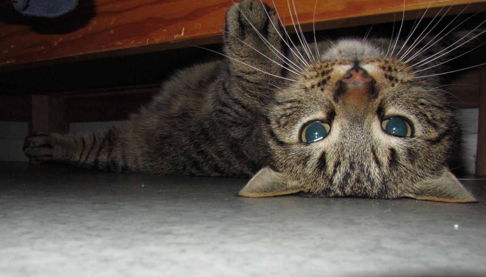 Puisque c'est ça, je vais me cacher sous l'armoire ! En attendant des jours meilleurs...