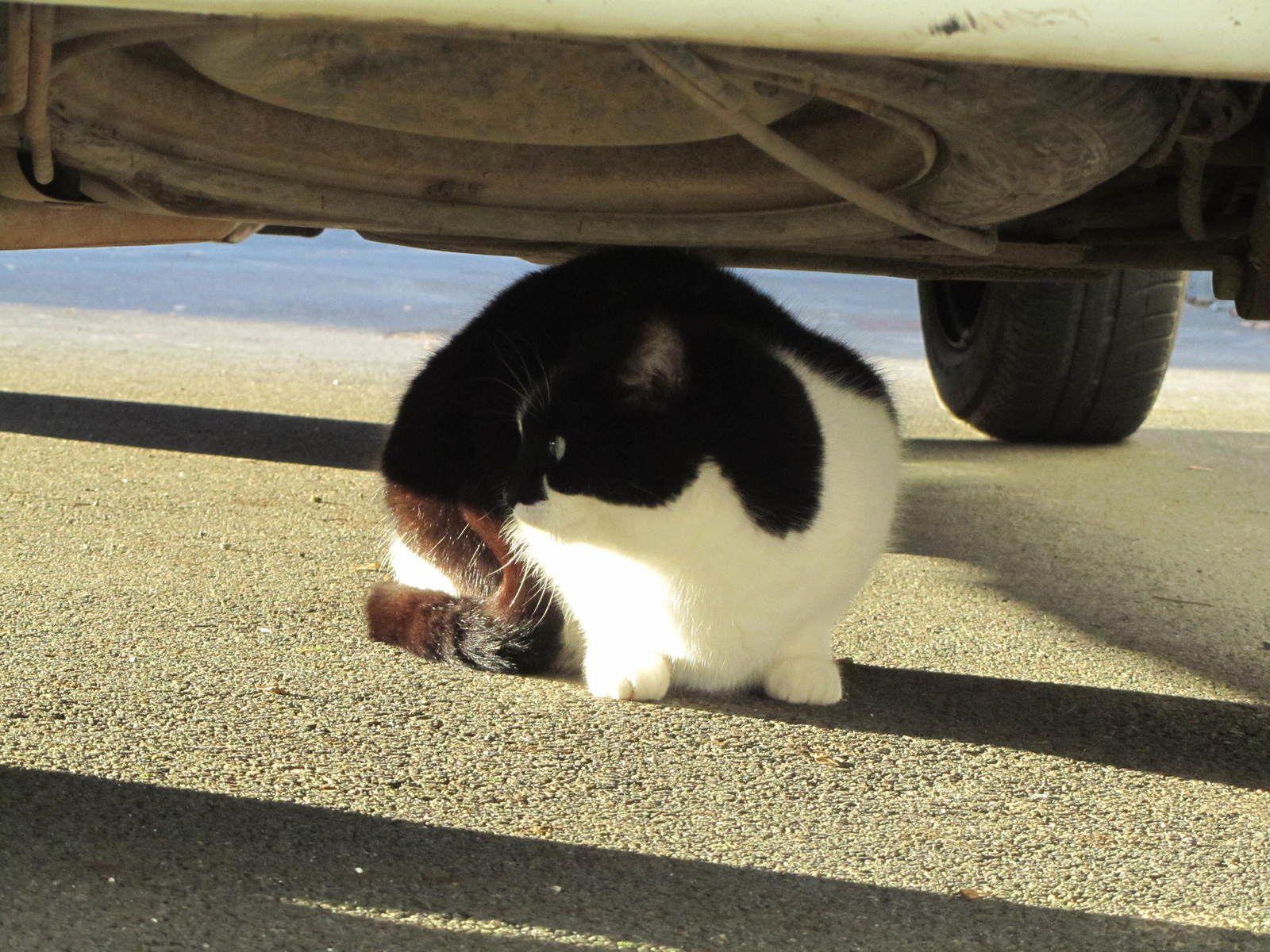 Sous la voiture