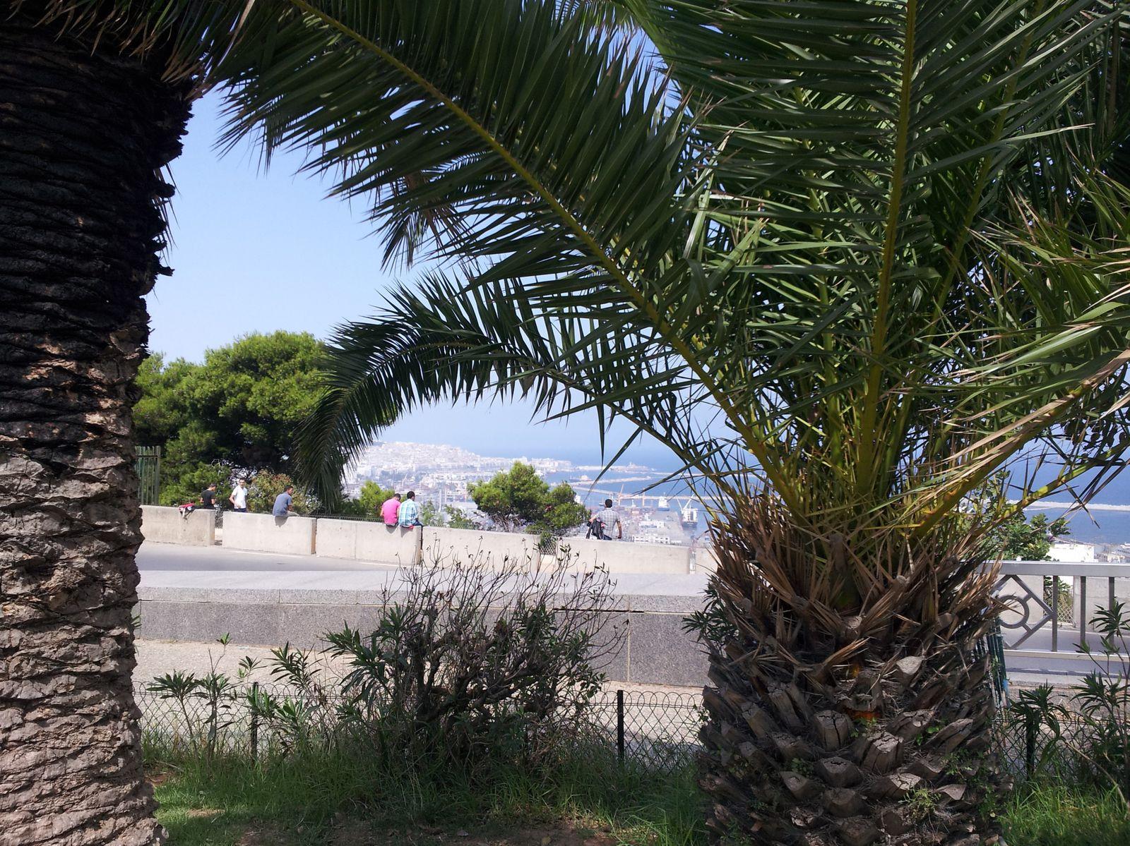 A l'ombre des palmiers, Alger
