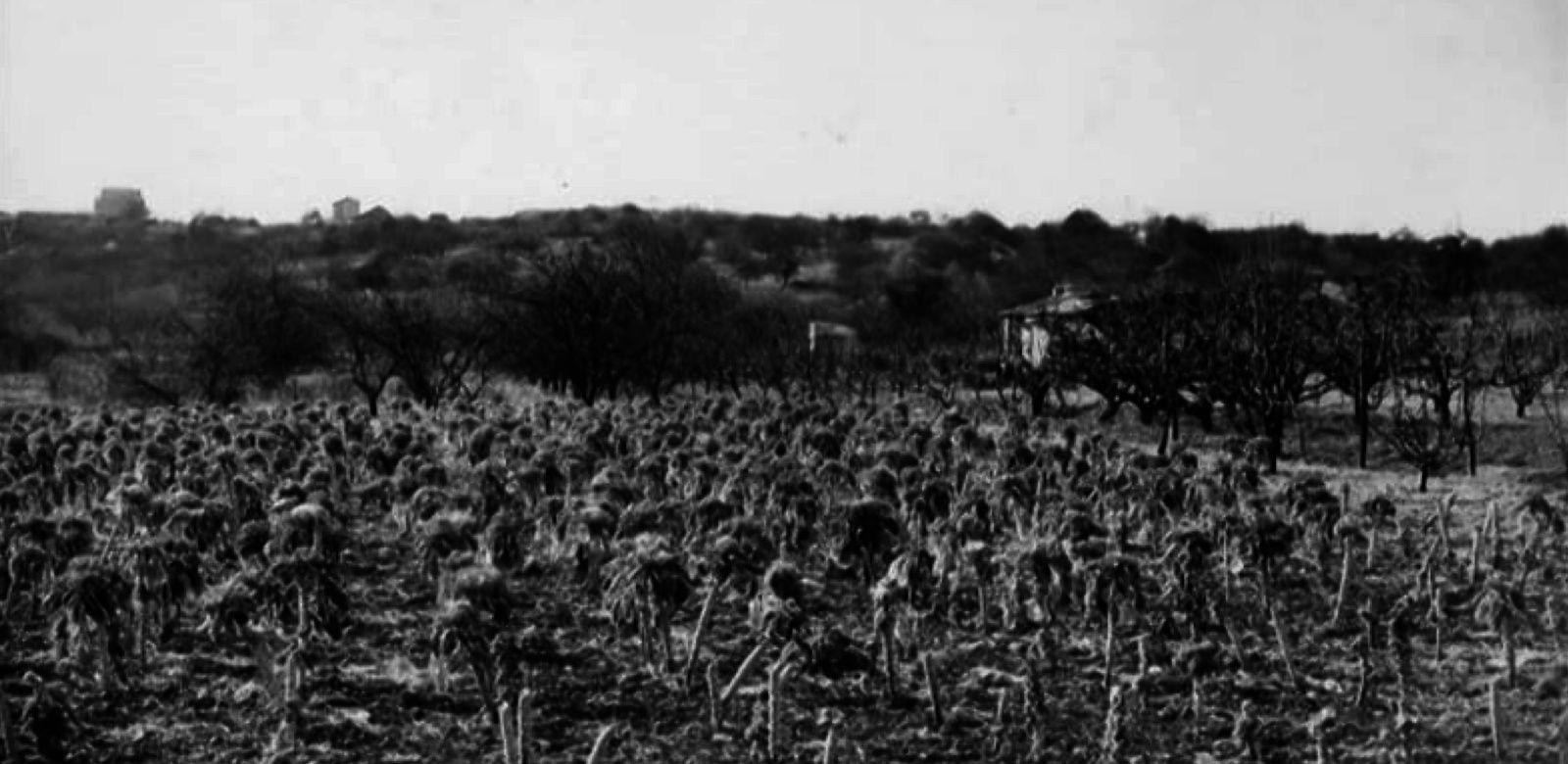 Les transformations de la plaine du Val-de-Fontenay