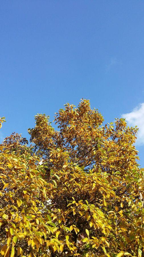 """Ciel d'automne limpide..."""" défi ciel"""""""