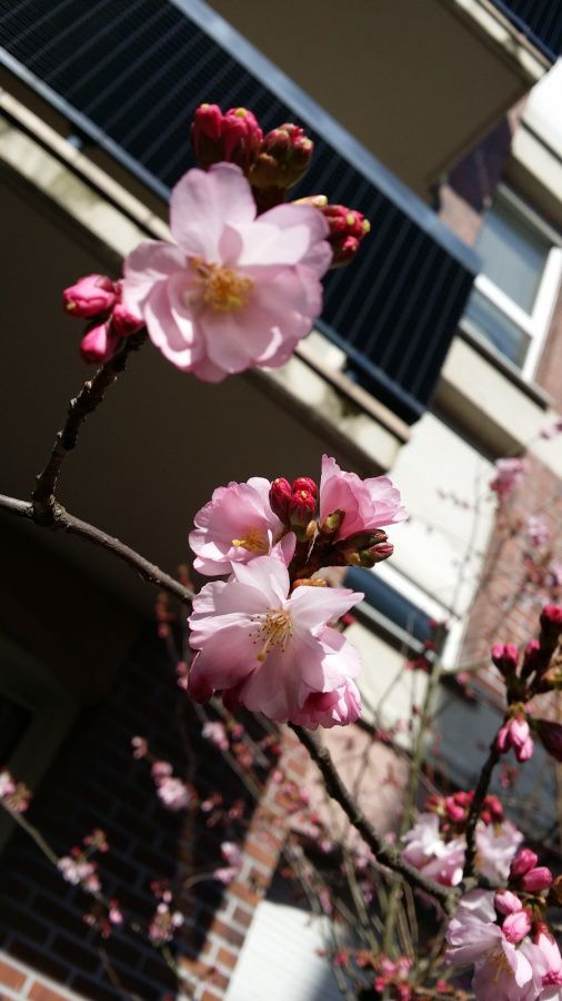 Spring in the city ...
