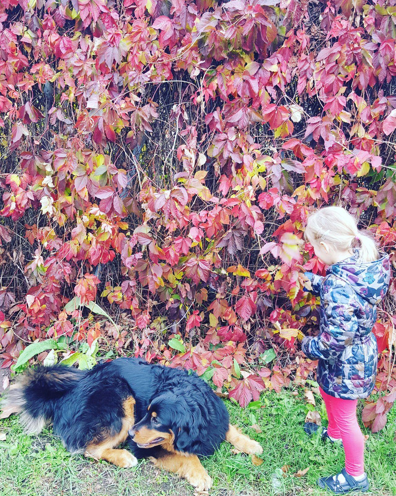balade d'automne..