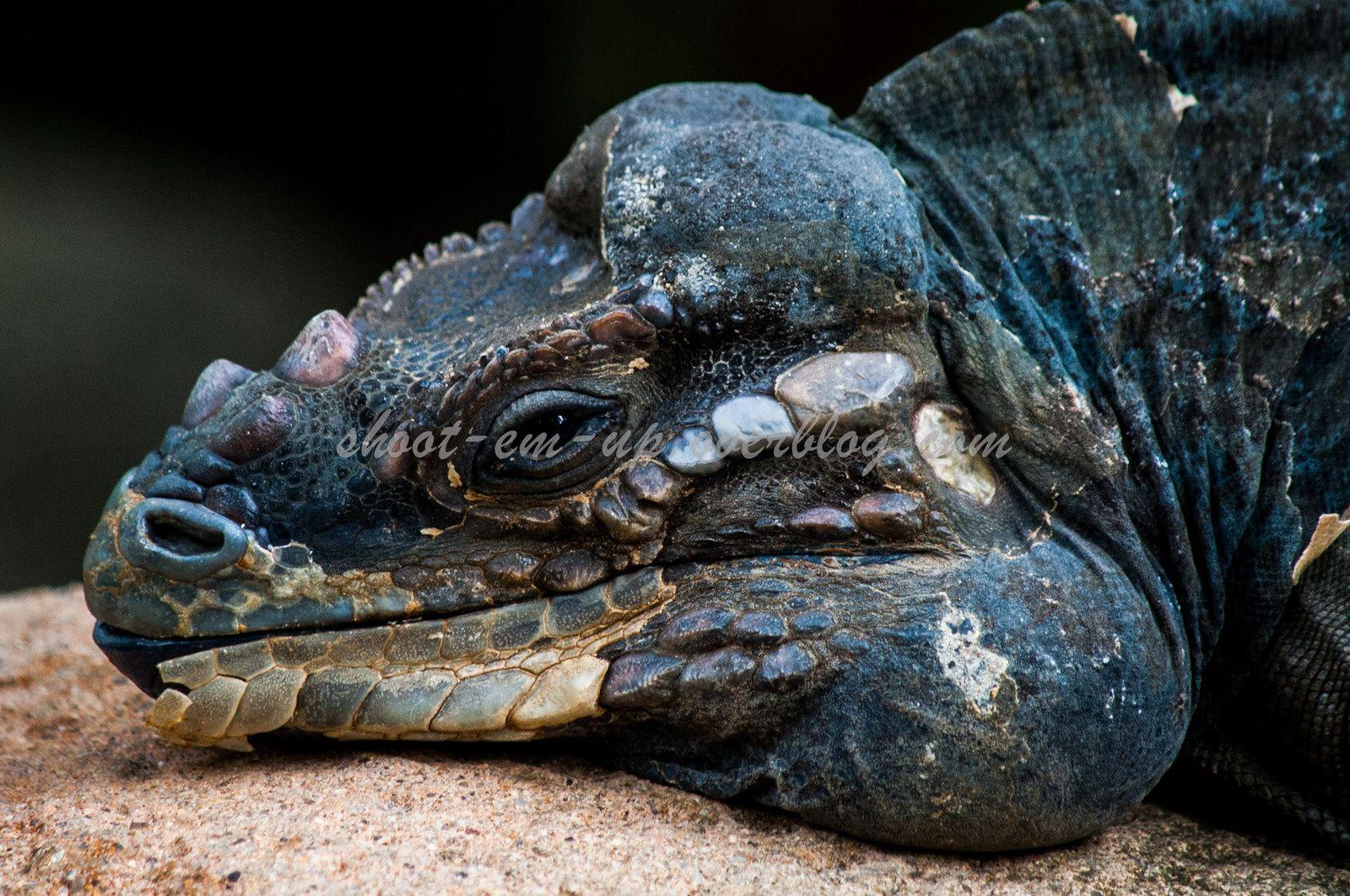 Portraits animaux : Zoo de Singapour