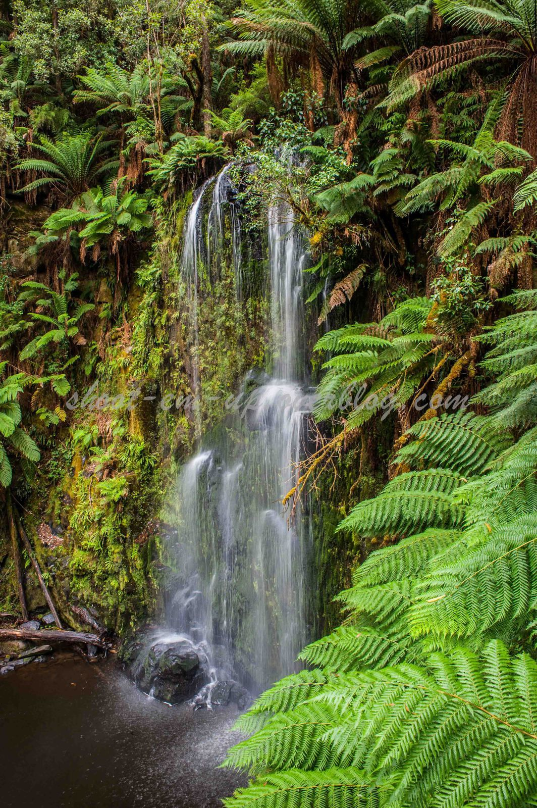 Day 2 : Great Otway National Park
