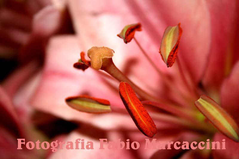 Fotografia Fabio Marcaccini