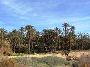 Tunisia: oasi e deserto, le parti più affascinanti di un paese che non ha solo belle località balneari, siti archeologici e interessanti città.