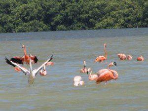 Reportage: Yucatan, seconda parte