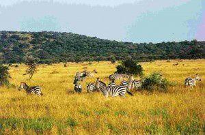 Reportage: I Parchi della Tanzania, un preziosissimo patrimonio da proteggere