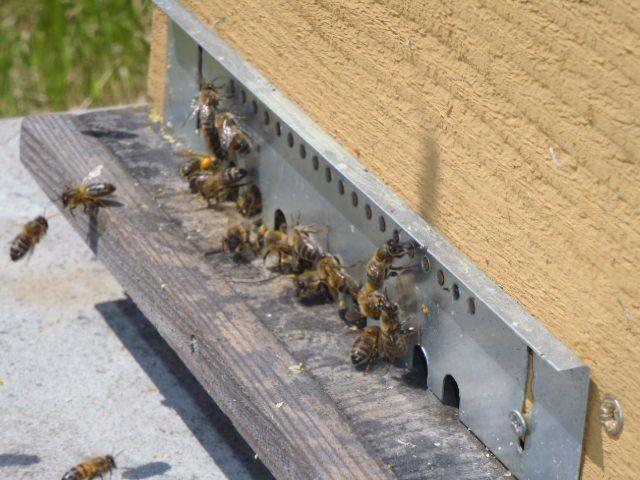 La vie au rucher