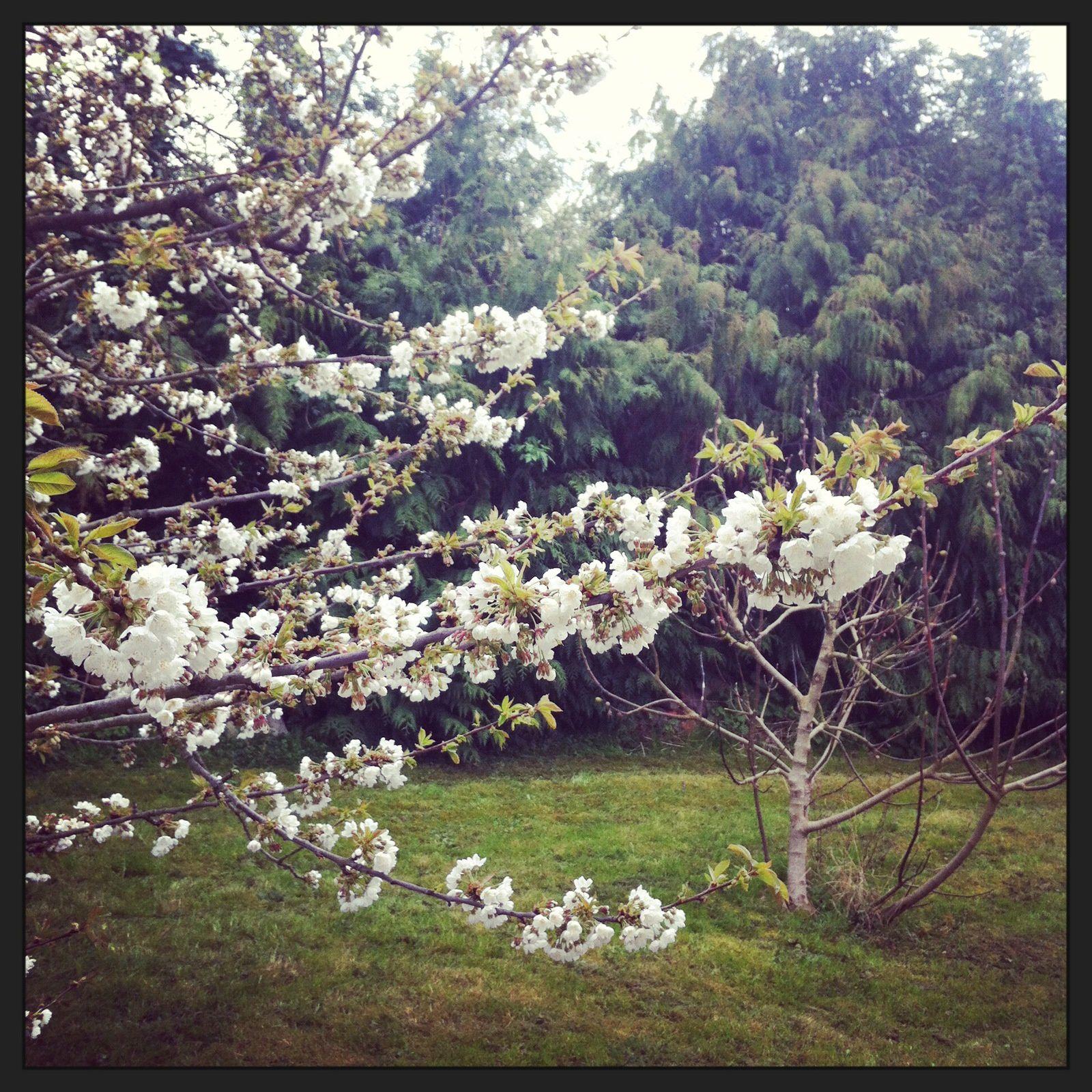 #2014projet52 - #printemps