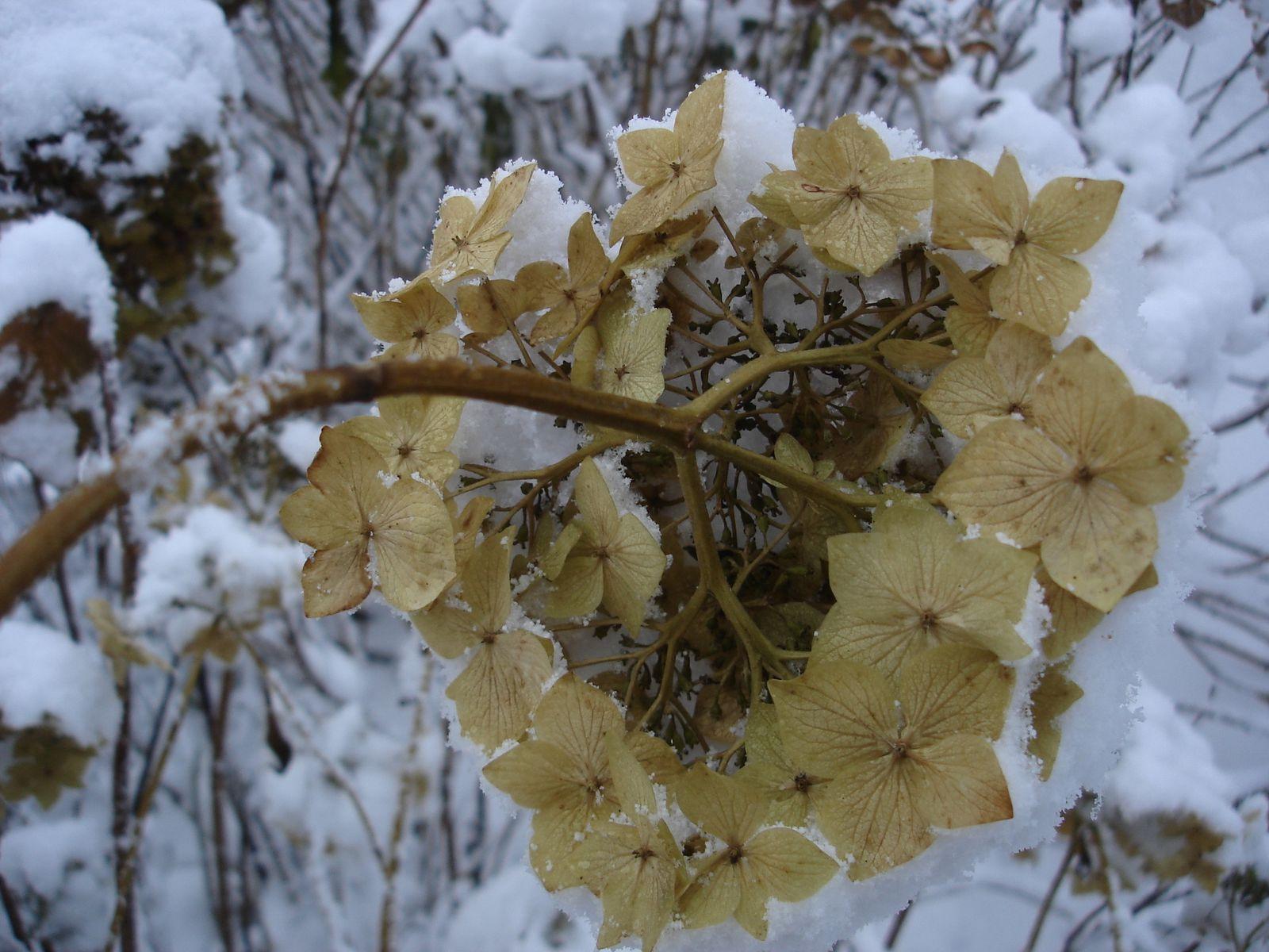 Notre jardin en hiver for Jardin en hiver
