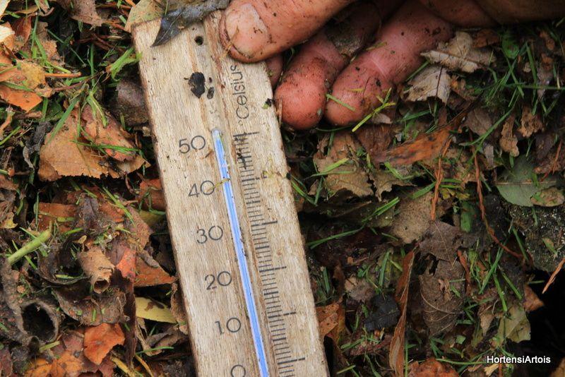 chaud chaud devant , température prise 40 cm à l'intérieur du tas de feuilles ! le même tas que précédemment , 5 jours plus tard , température 50° ou plus , mon thermomètre ne va pas au delà !