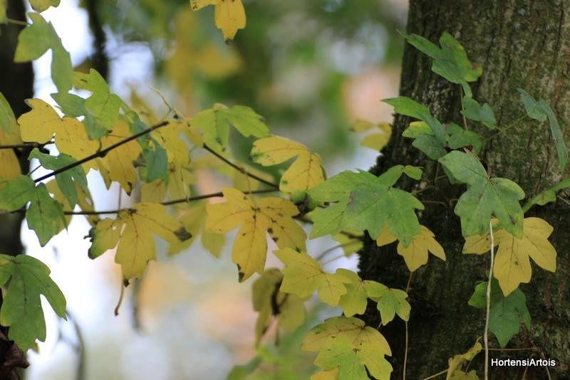 les couleurs du jardin en automne