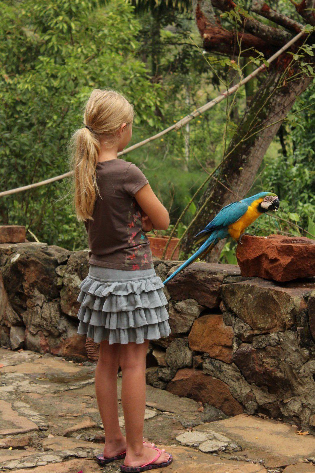 Les perroquets sont quelques peu agressifs si tu ne discutent pas avec eux, ils te proposent de la coco, du cacao, t'appelent maman...et te harcellent à longueur de journée!