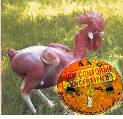 Opposition togolaise, presqu'une poule déplumée