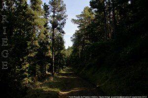 Forêt Royale de Prades (1540m)