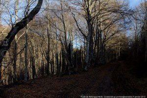 Forêt de Bellongue-Nord