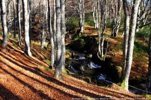 Ruisseau de Calvière (1470m)