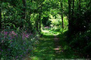 Chemin du Vigné