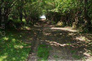 Chemin de Lapège