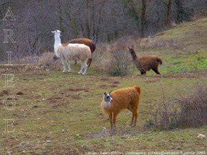Lamas - Saleix (890m)